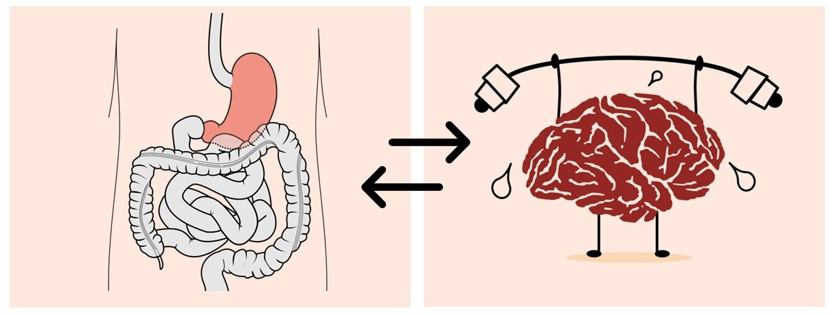 Cartoon visualizing the interaction between the stomach/gut and the brain.